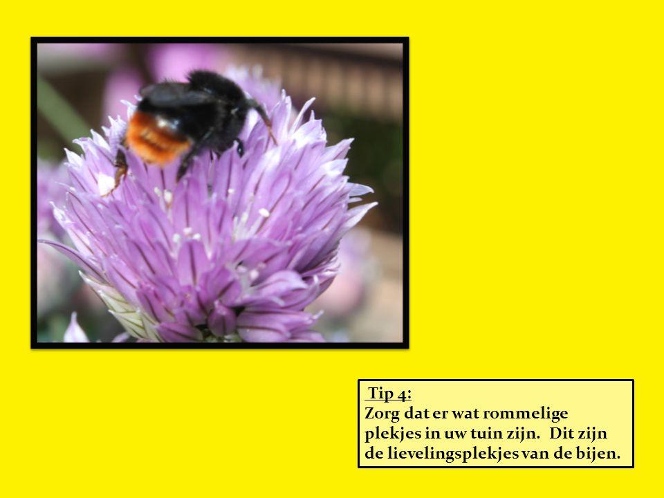 Tip 4: Zorg dat er wat rommelige plekjes in uw tuin zijn. Dit zijn de lievelingsplekjes van de bijen.
