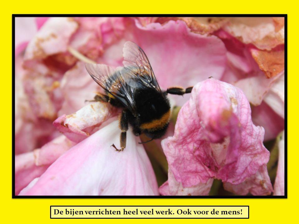 De bijen verrichten heel veel werk. Ook voor de mens!