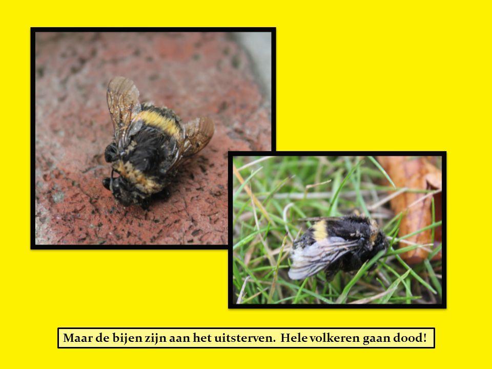 Maar de bijen zijn aan het uitsterven. Hele volkeren gaan dood!