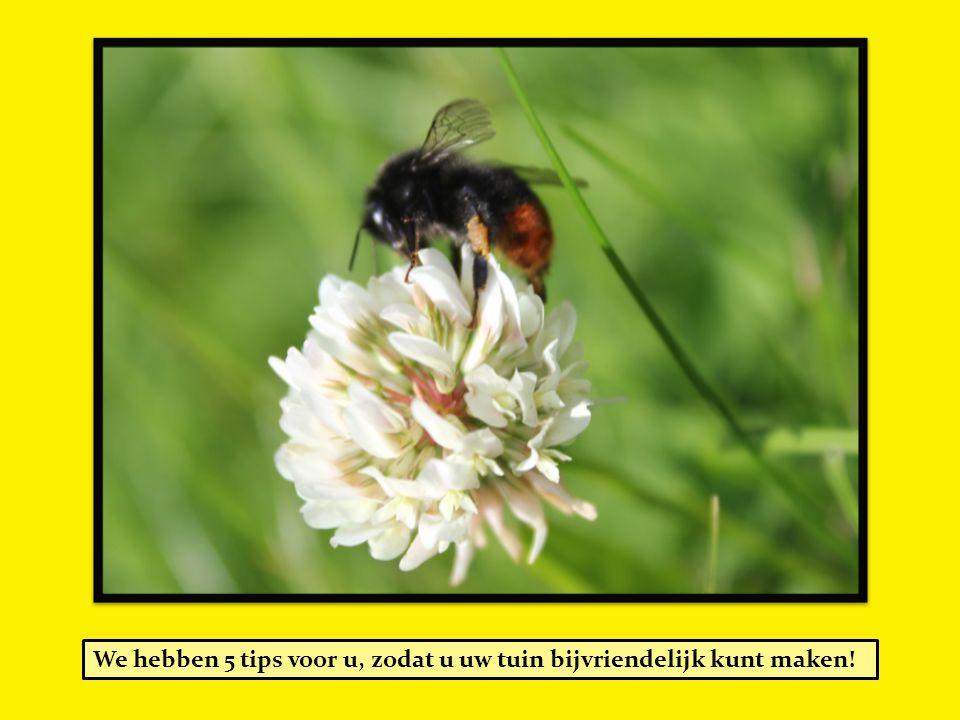 We hebben 5 tips voor u, zodat u uw tuin bijvriendelijk kunt maken!