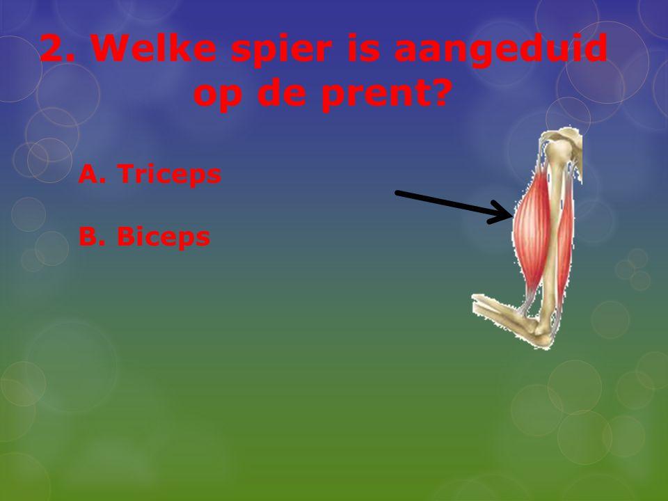2. Welke spier is aangeduid op de prent? A. Triceps B. Biceps