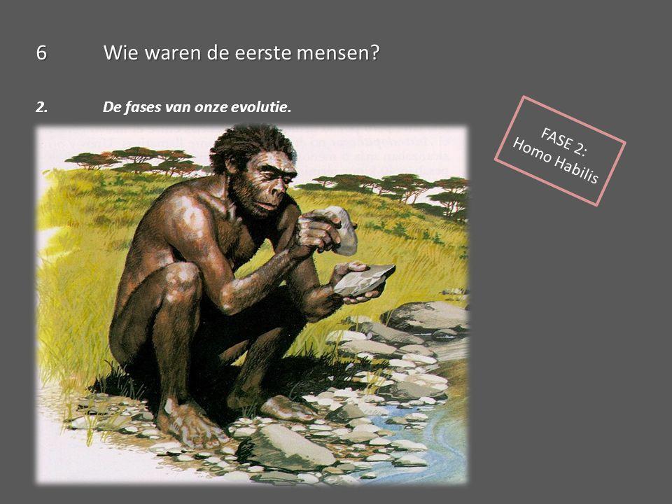6Wie waren de eerste mensen? 2. De fases van onze evolutie. FASE 2: Homo Habilis