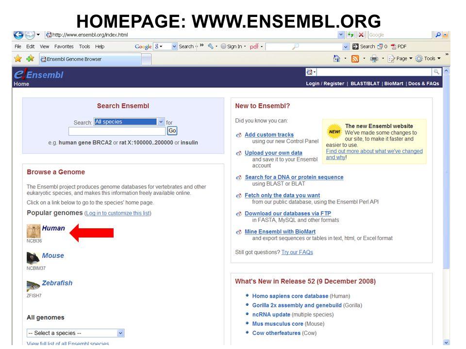HOMEPAGE: WWW.ENSEMBL.ORG