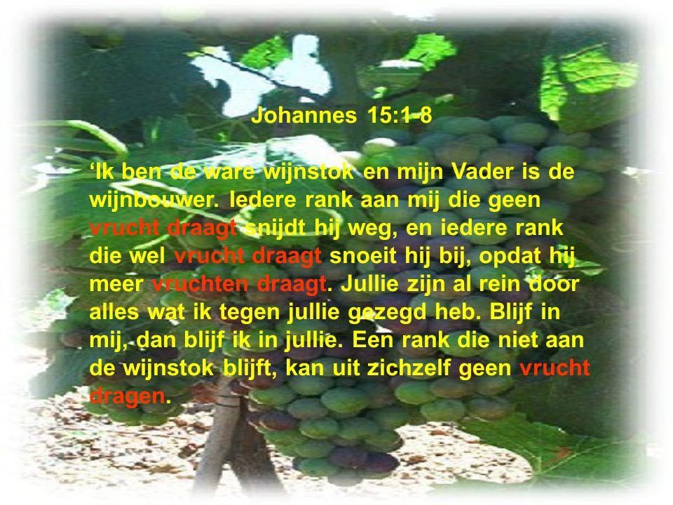 Johannes 15:1-8 'Ik ben de ware wijnstok en mijn Vader is de wijnbouwer. Iedere rank aan mij die geen vrucht draagt snijdt hij weg, en iedere rank die