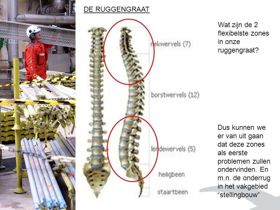 Wat zijn de 2 flexibelste zones in onze ruggengraat.