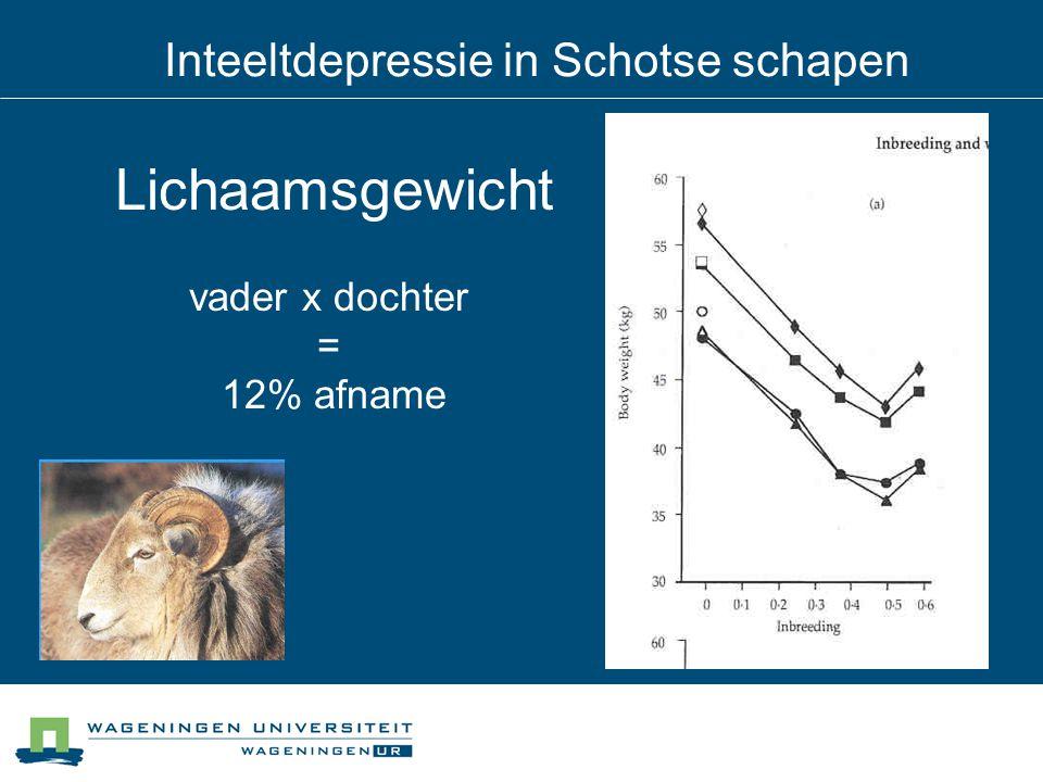 Inteeltdepressie in Schotse schapen Lichaamsgewicht vader x dochter = 12% afname