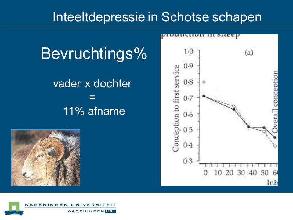 Inteeltdepressie in Schotse schapen Bevruchtings% vader x dochter = 11% afname
