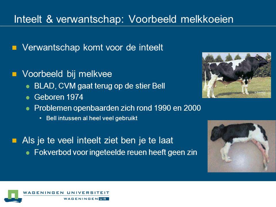Inteelt & verwantschap: Voorbeeld melkkoeien Verwantschap komt voor de inteelt Voorbeeld bij melkvee BLAD, CVM gaat terug op de stier Bell Geboren 197