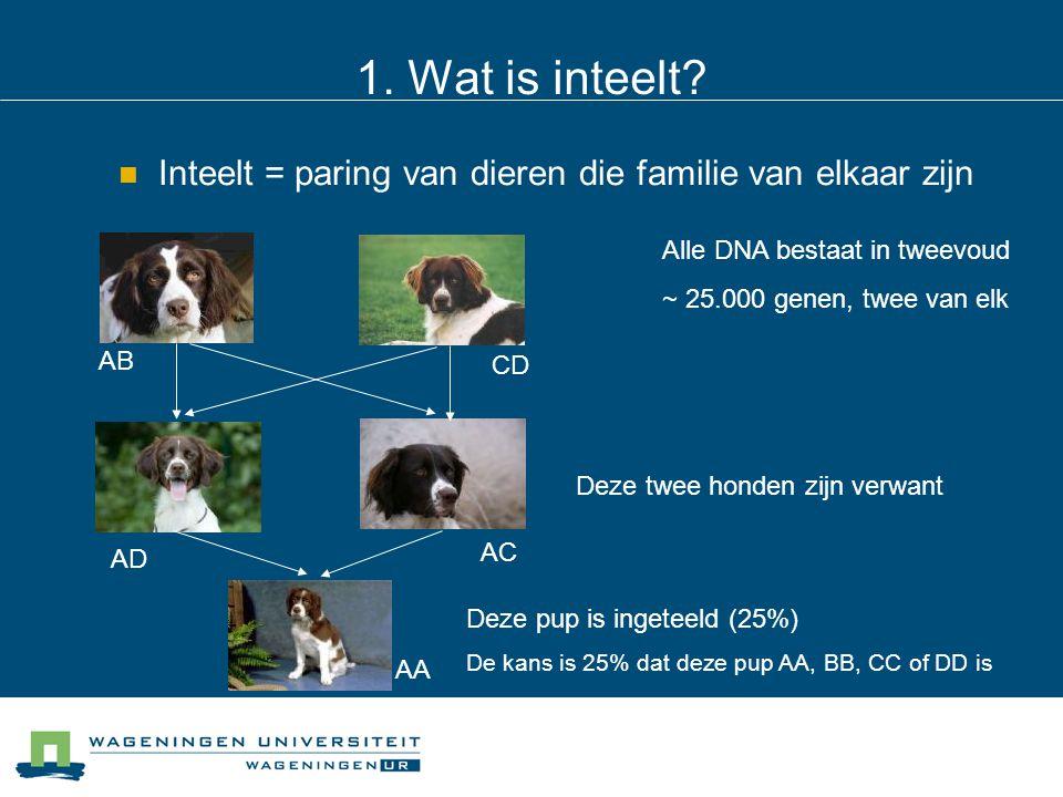 1. Wat is inteelt? Inteelt = paring van dieren die familie van elkaar zijn Alle DNA bestaat in tweevoud ~ 25.000 genen, twee van elk Deze twee honden