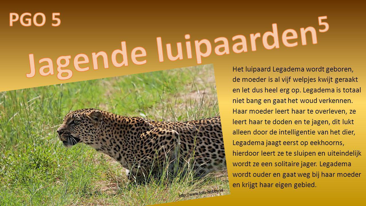 Het luipaard Legadema wordt geboren, de moeder is al vijf welpjes kwijt geraakt en let dus heel erg op. Legadema is totaal niet bang en gaat het woud