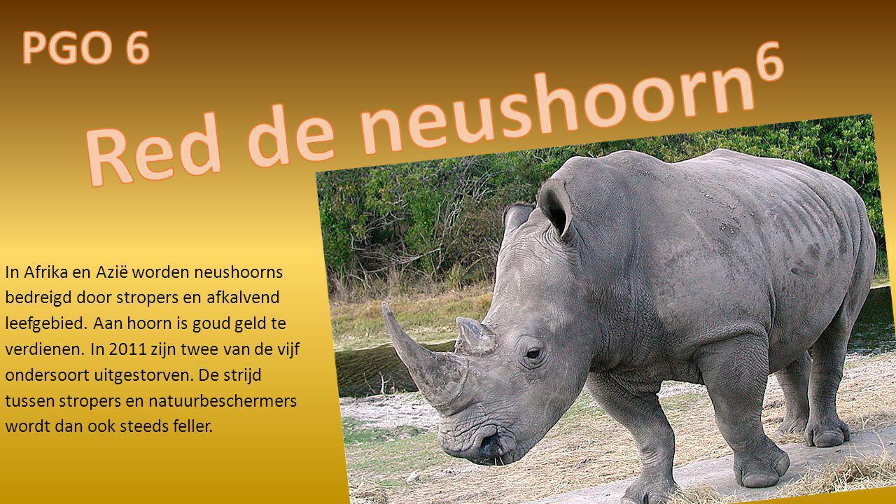 In Afrika en Azië worden neushoorns bedreigd door stropers en afkalvend leefgebied. Aan hoorn is goud geld te verdienen. In 2011 zijn twee van de vijf