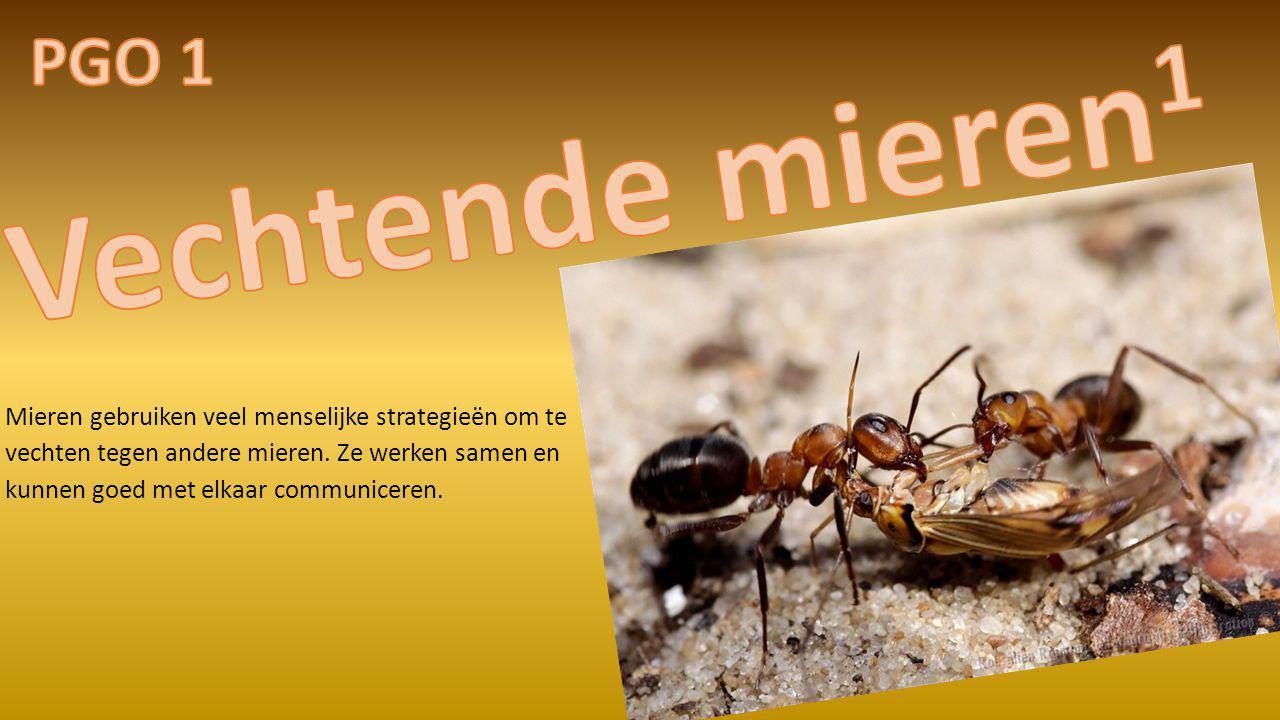 Mieren gebruiken veel menselijke strategieën om te vechten tegen andere mieren. Ze werken samen en kunnen goed met elkaar communiceren.