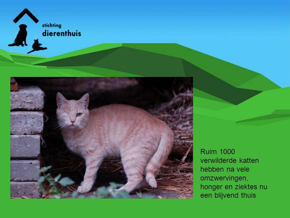 Ruim 1000 verwilderde katten hebben na vele omzwervingen, honger en ziektes nu een blijvend thuis