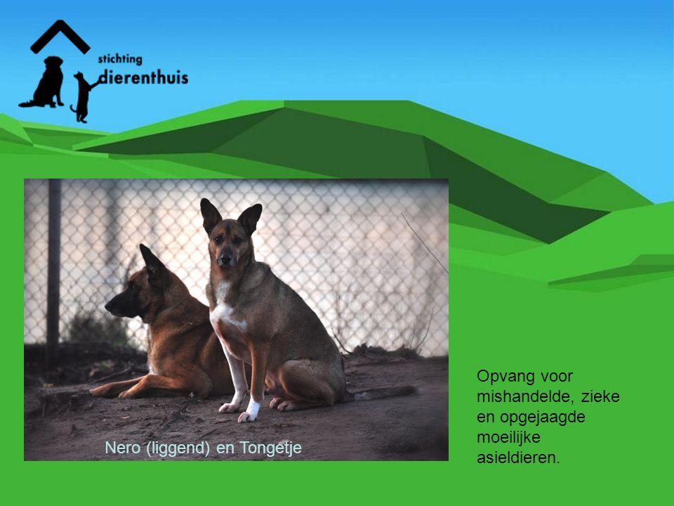 Namens de 70 honden, 1000 verwilderde katten en 300 aids en leucose katten heel veel dank voor uw steun en vertrouwen.