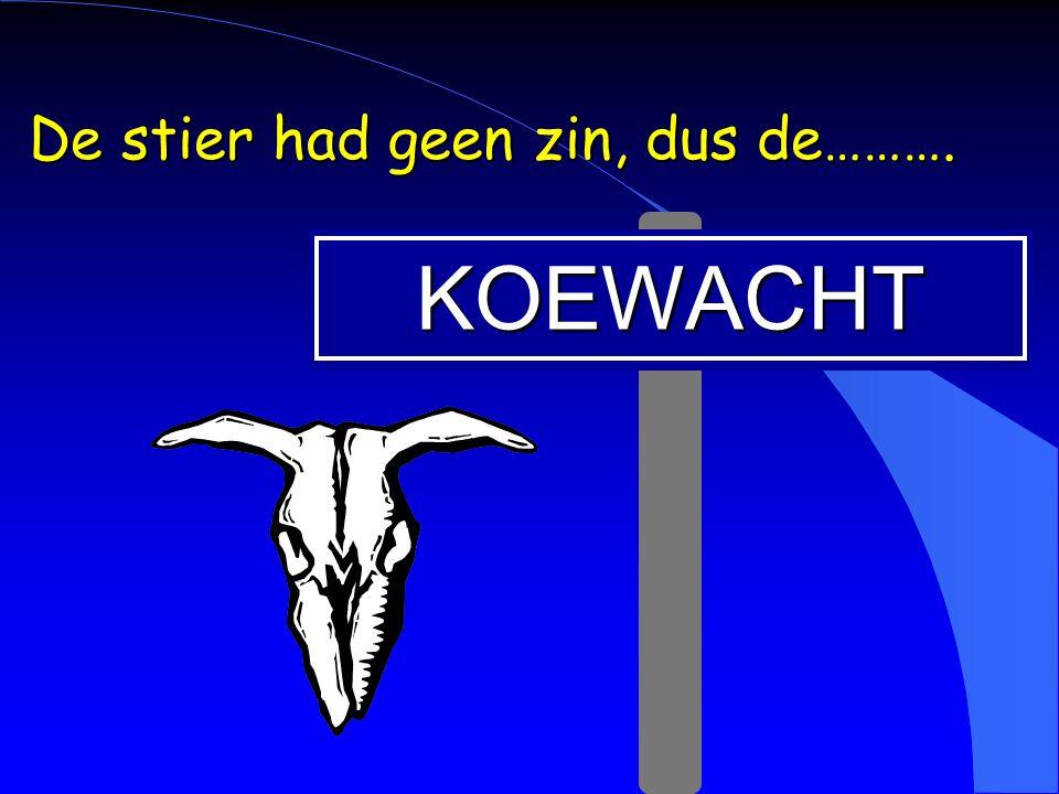 KOEWACHT De stier had geen zin, dus de……….