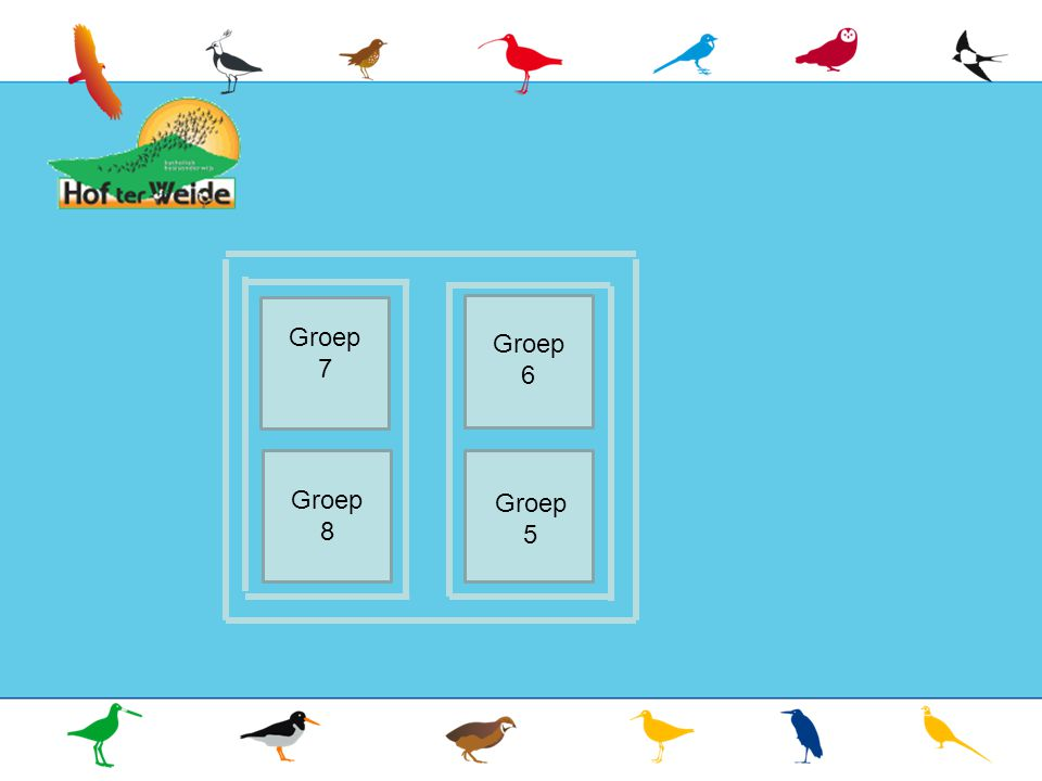 Groep 7 Groep 7 Groep 7 Groep 6 Groep 8 Groep 5