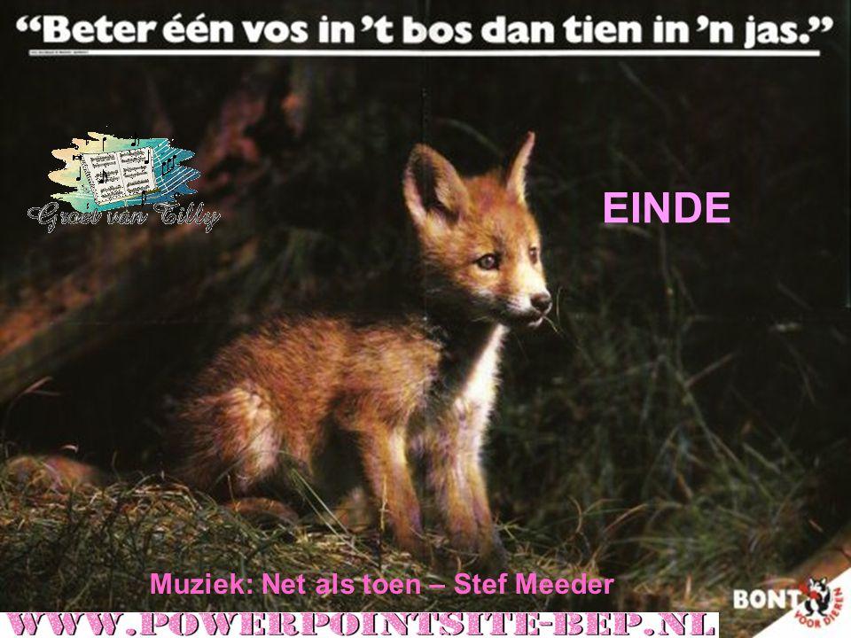 made by tillygemaakt voor: www.powerpointsite-bep.nl Reintje de vos wordt het meest bedreigd door de mens voor zijn pels, staart en plezierjacht.