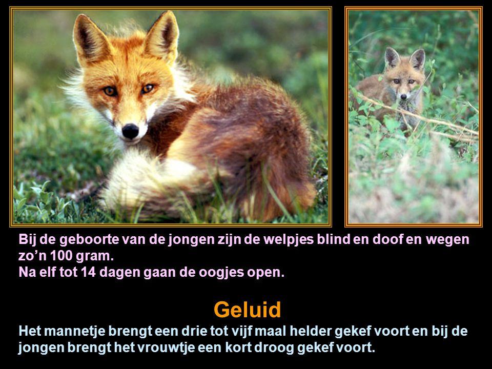 made by tillygemaakt voor: www.powerpointsite-bep.nl