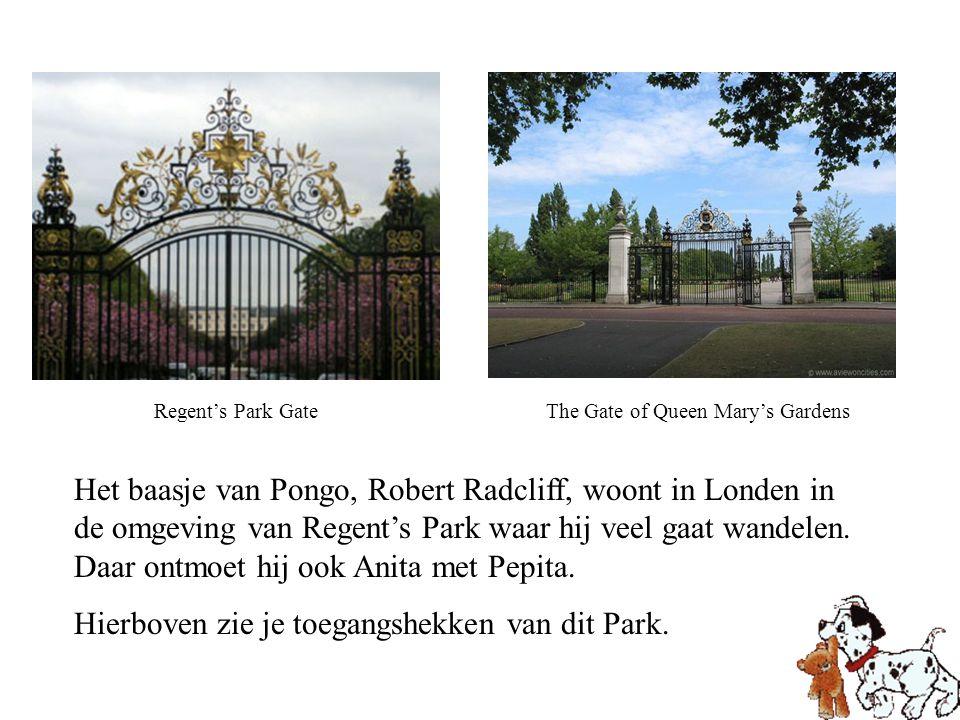 Het baasje van Pongo, Robert Radcliff, woont in Londen in de omgeving van Regent's Park waar hij veel gaat wandelen. Daar ontmoet hij ook Anita met Pe