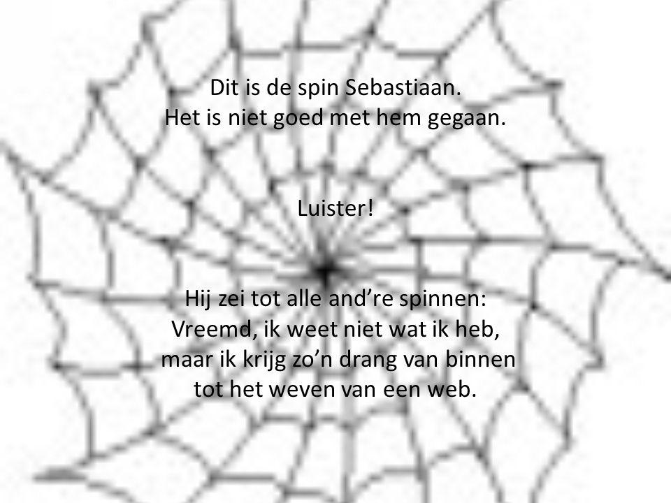 Dit is de spin Sebastiaan.Het is niet goed met hem gegaan.