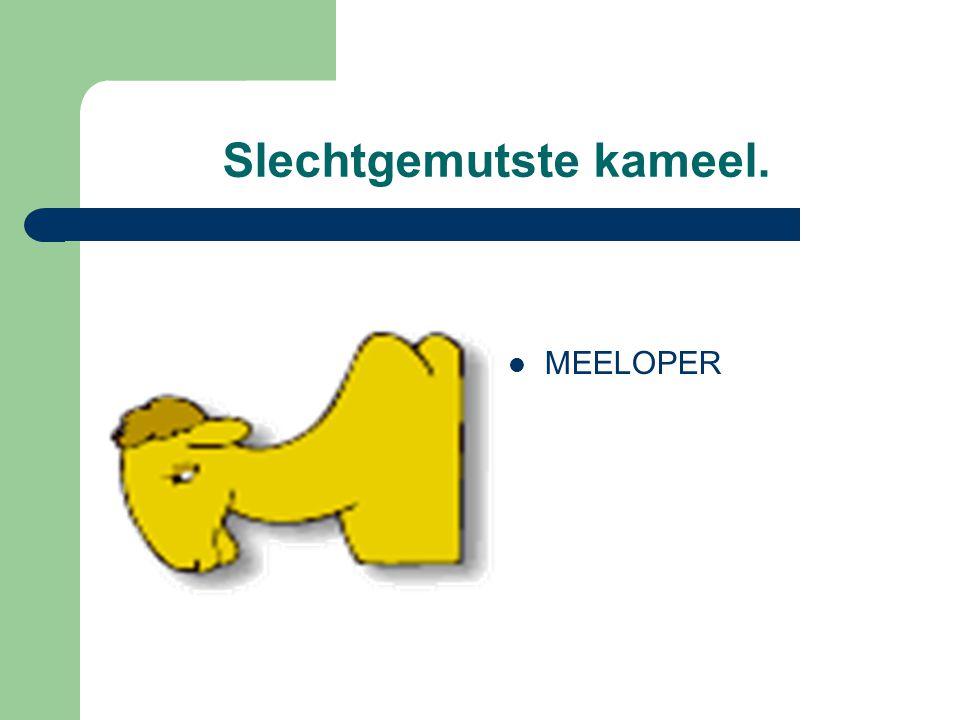 Slechtgemutste kameel. MEELOPER