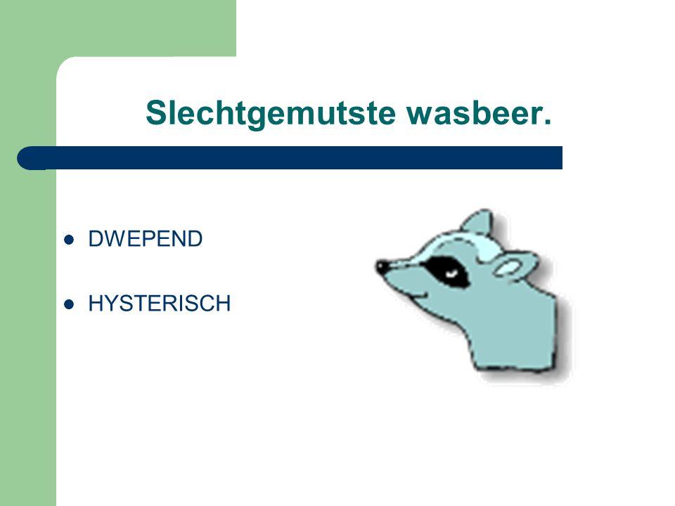 Slechtgemutste wasbeer. DWEPEND HYSTERISCH