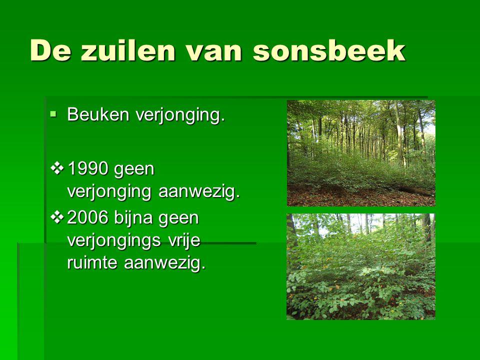 De zuilen van sonsbeek  Beuken verjonging.  1990 geen verjonging aanwezig.  2006 bijna geen verjongings vrije ruimte aanwezig.