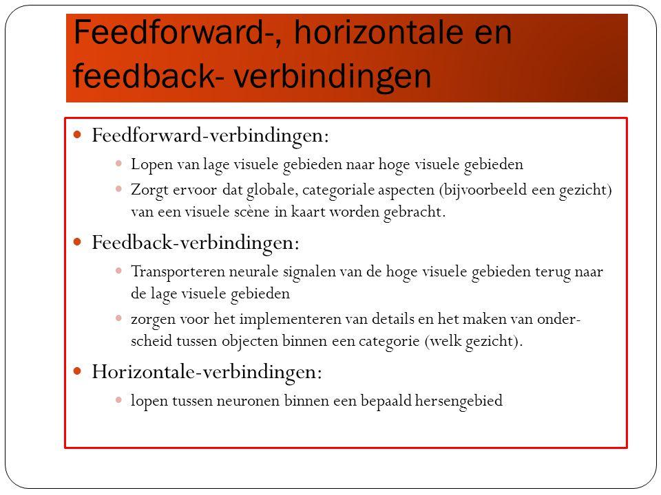 Feedforward-, horizontale en feedback- verbindingen Feedforward-verbindingen: Lopen van lage visuele gebieden naar hoge visuele gebieden Zorgt ervoor dat globale, categoriale aspecten (bijvoorbeeld een gezicht) van een visuele scène in kaart worden gebracht.