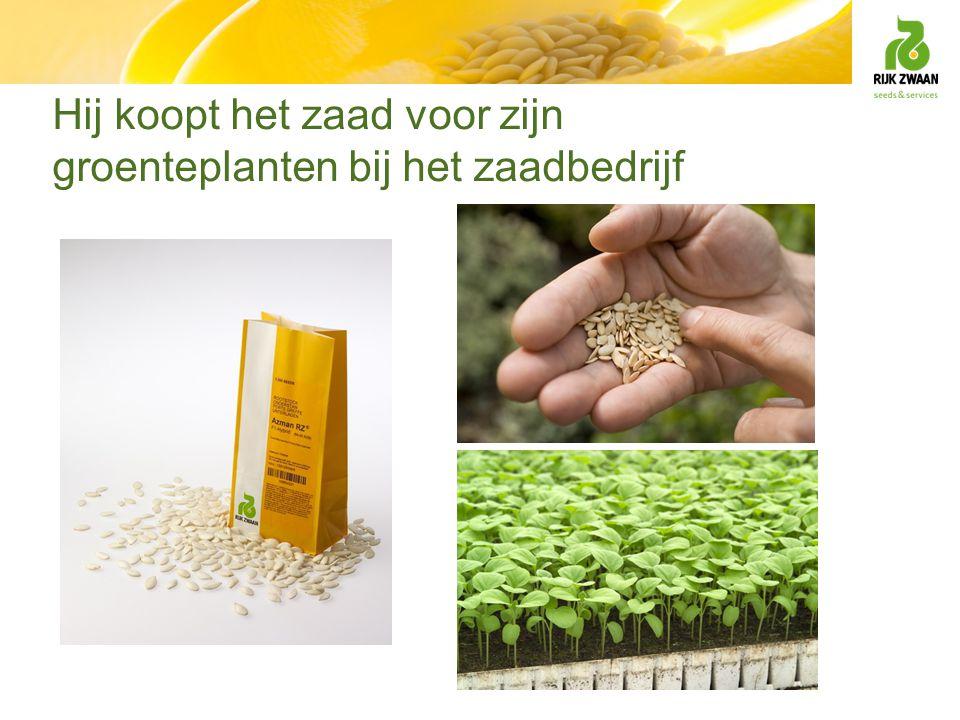 Beste nakomeling wordt nieuw ras 'Togrie' Zaad vruchten oogsten zaden eruitspoelen drogen zeven afwegen en verpakken