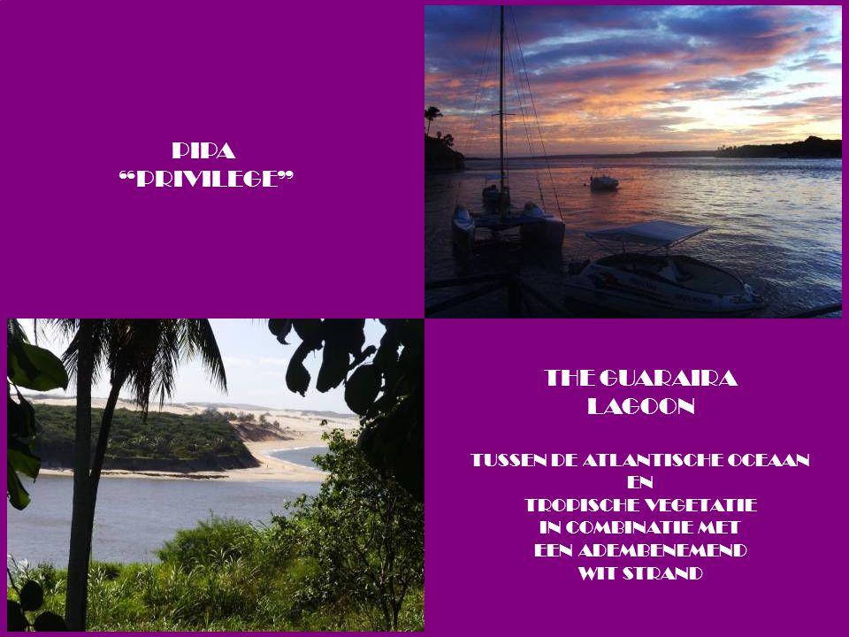 THE GUARAIRA LAGOON TUSSEN DE ATLANTISCHE OCEAAN EN TROPISCHE VEGETATIE IN COMBINATIE MET EEN ADEMBENEMEND WIT STRAND PIPA PRIVILEGE