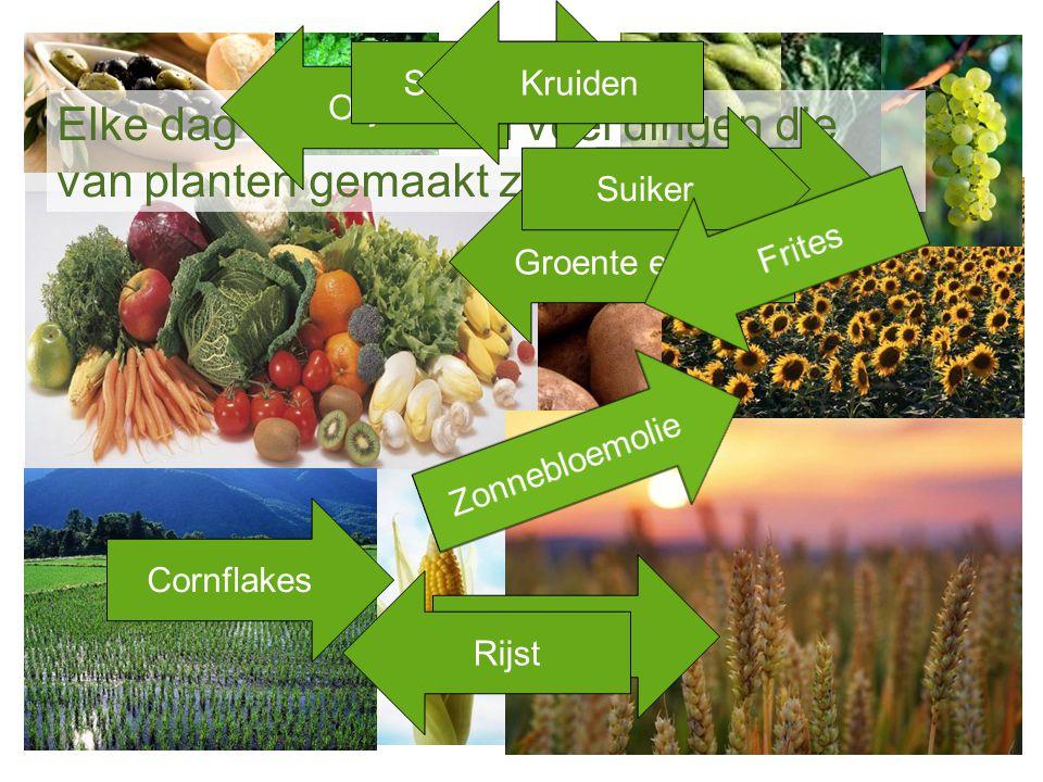 Elke dag eten we heel veel dingen die van planten gemaakt zijn Olijfolie Sojasaus Druivensap Brood Kruiden Rijst Groente en Fruit Suiker Cornflakes