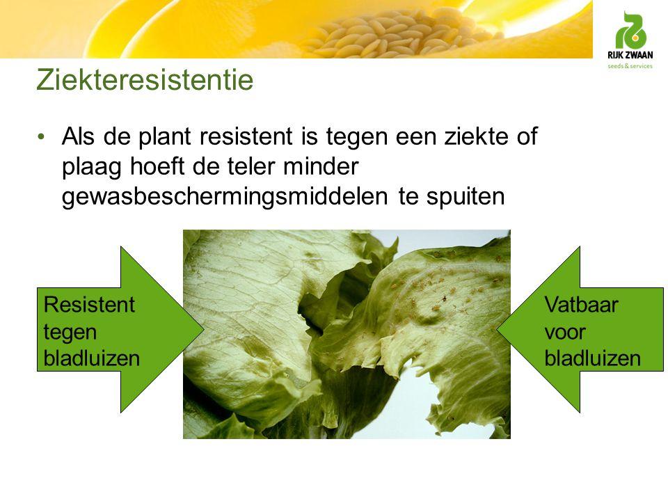 Ziekteresistentie Als de plant resistent is tegen een ziekte of plaag hoeft de teler minder gewasbeschermingsmiddelen te spuiten Resistent tegen bladl