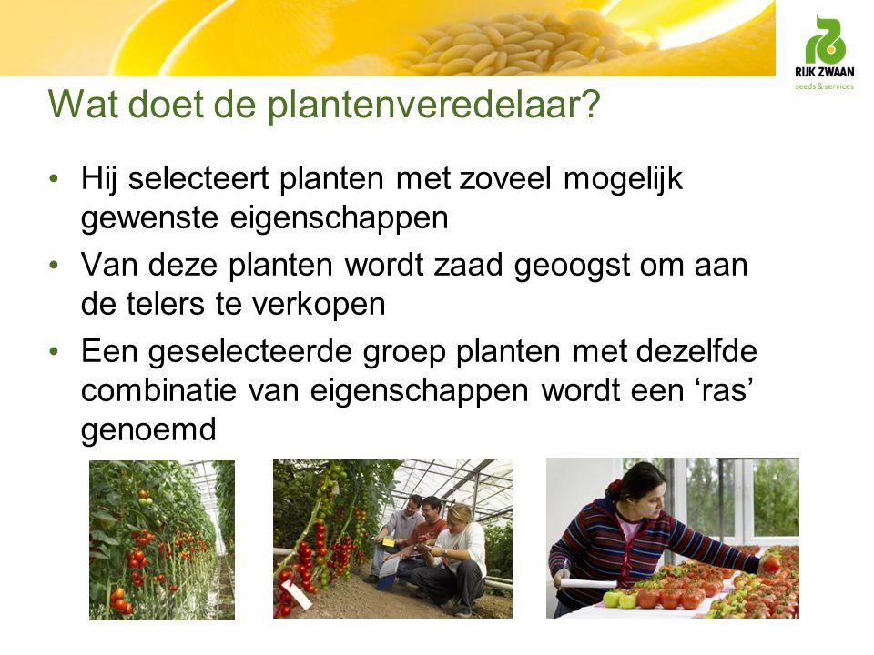 Wat doet de plantenveredelaar? Hij selecteert planten met zoveel mogelijk gewenste eigenschappen Van deze planten wordt zaad geoogst om aan de telers