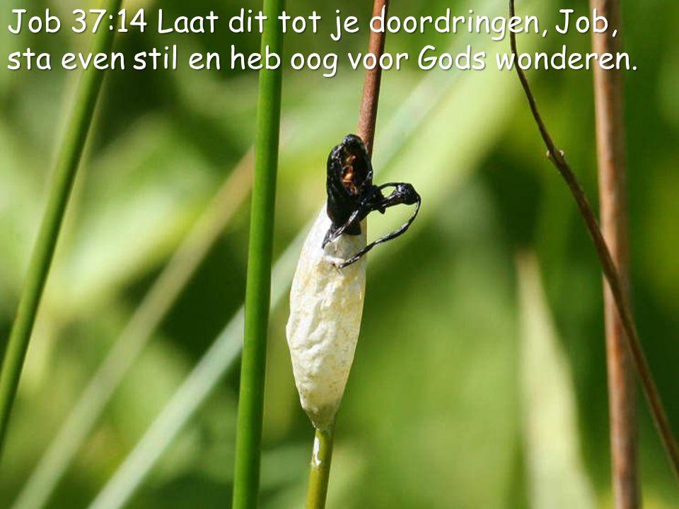 4 Job 37:14 Laat dit tot je doordringen, Job, sta even stil en heb oog voor Gods wonderen.