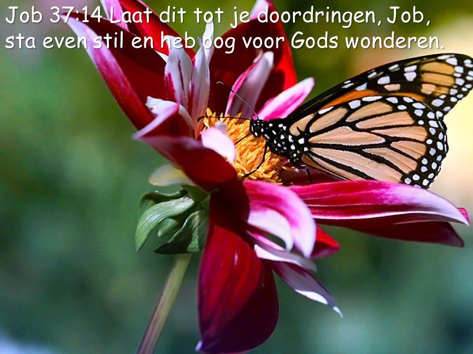 5 Job 37:14 Laat dit tot je doordringen, Job, sta even stil en heb oog voor Gods wonderen.