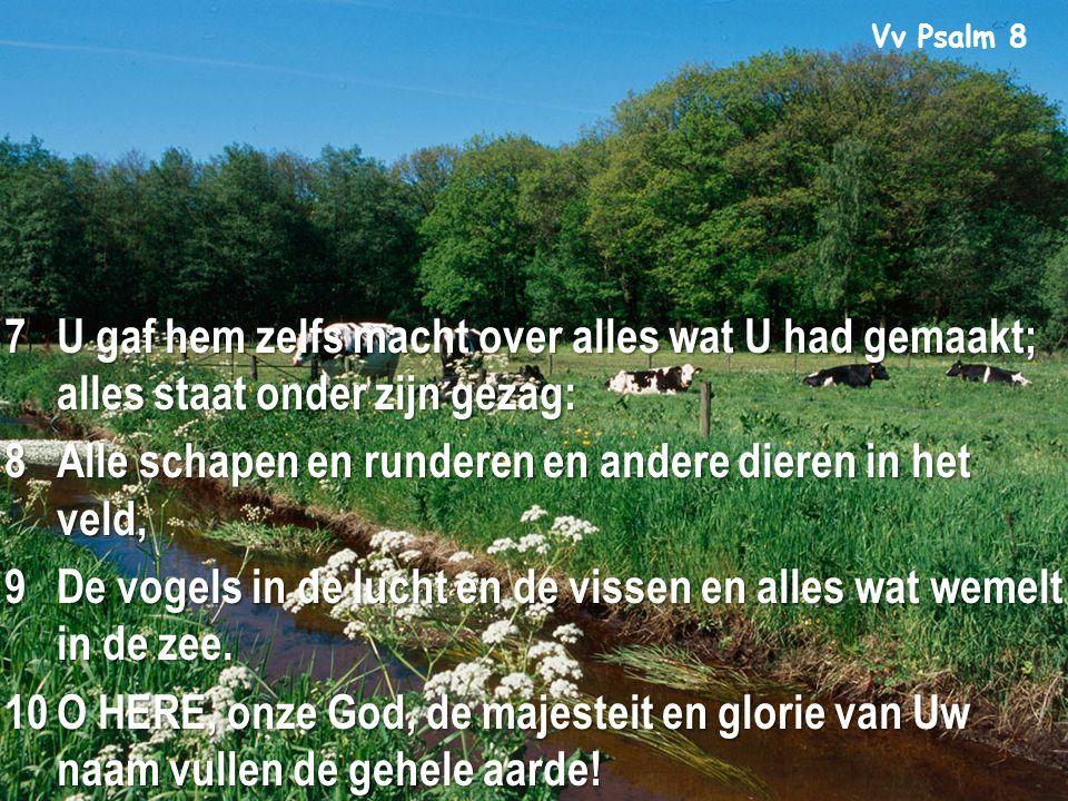 9 Vv Psalm 8 7U gaf hem zelfs macht over alles wat U had gemaakt; alles staat onder zijn gezag: 8Alle schapen en runderen en andere dieren in het veld