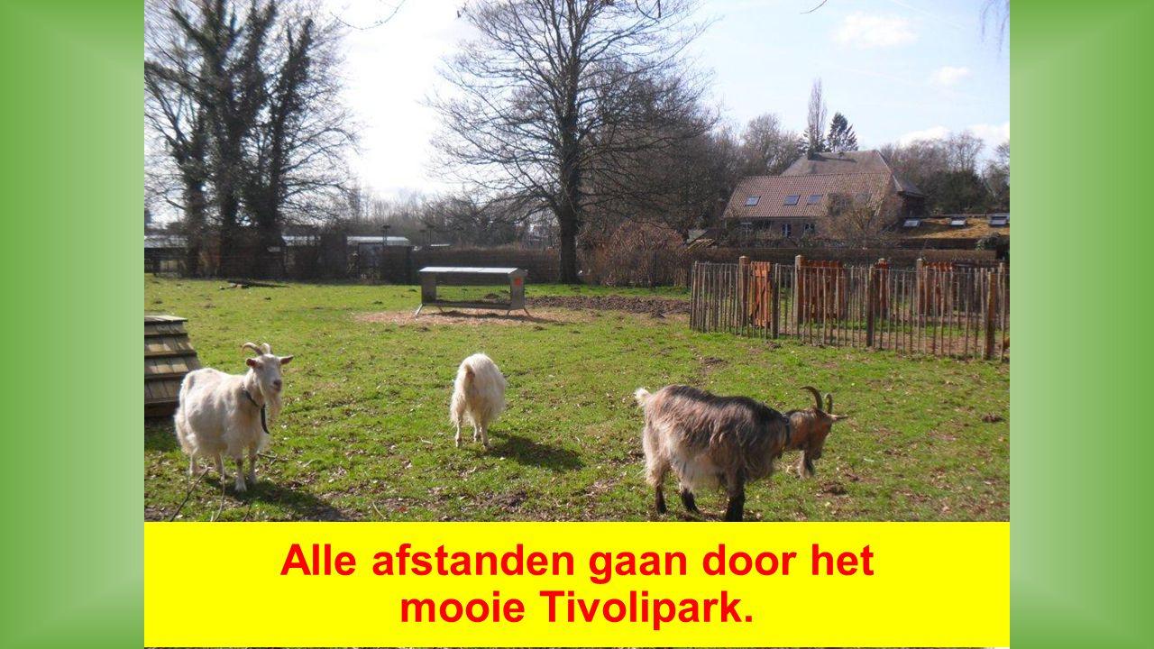 Alle afstanden gaan door het mooie Tivolipark.