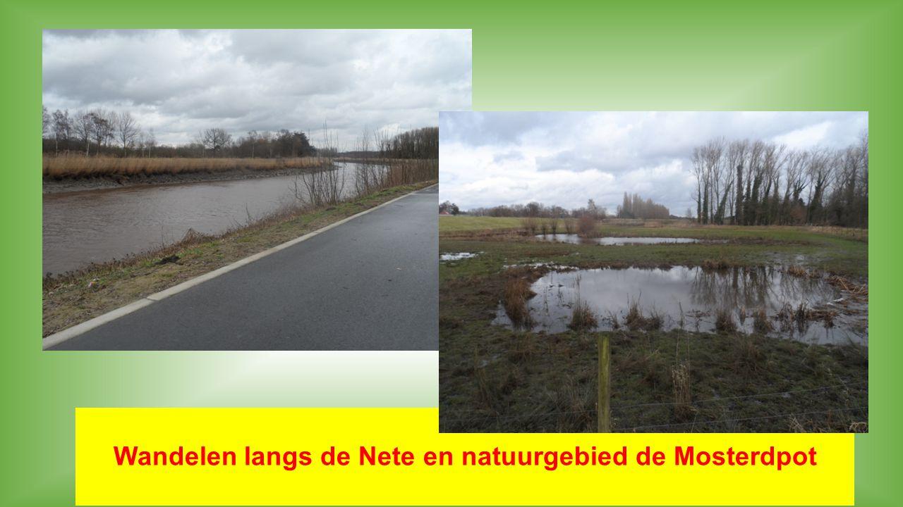 Wandelen langs de Nete en natuurgebied de Mosterdpot