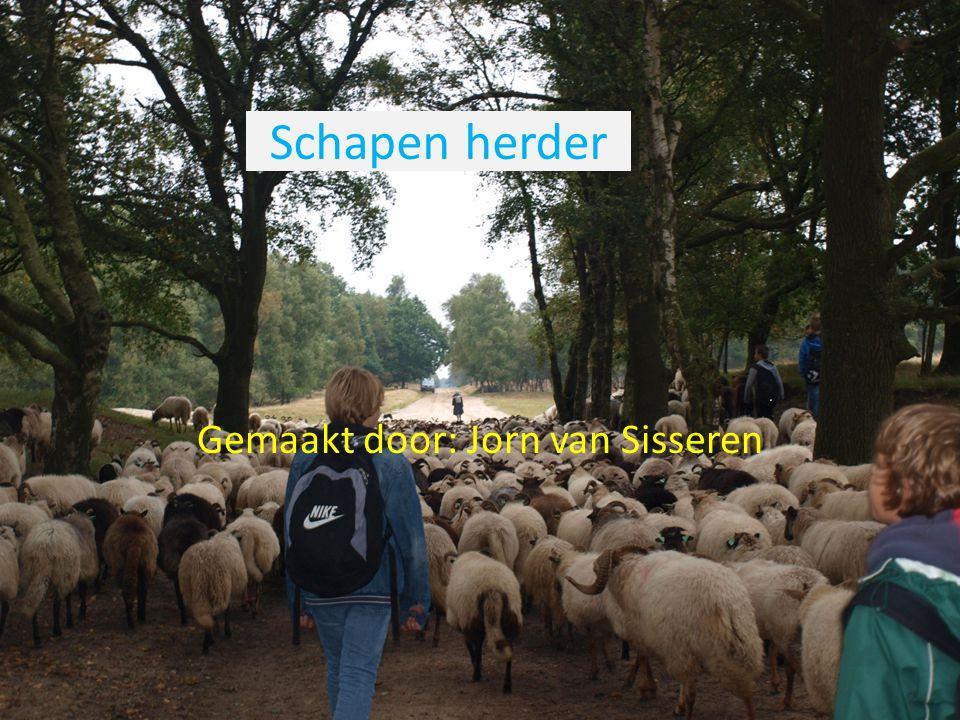 Op het schapen veld.We moesten de schapen naar een groot houten hek lijden.