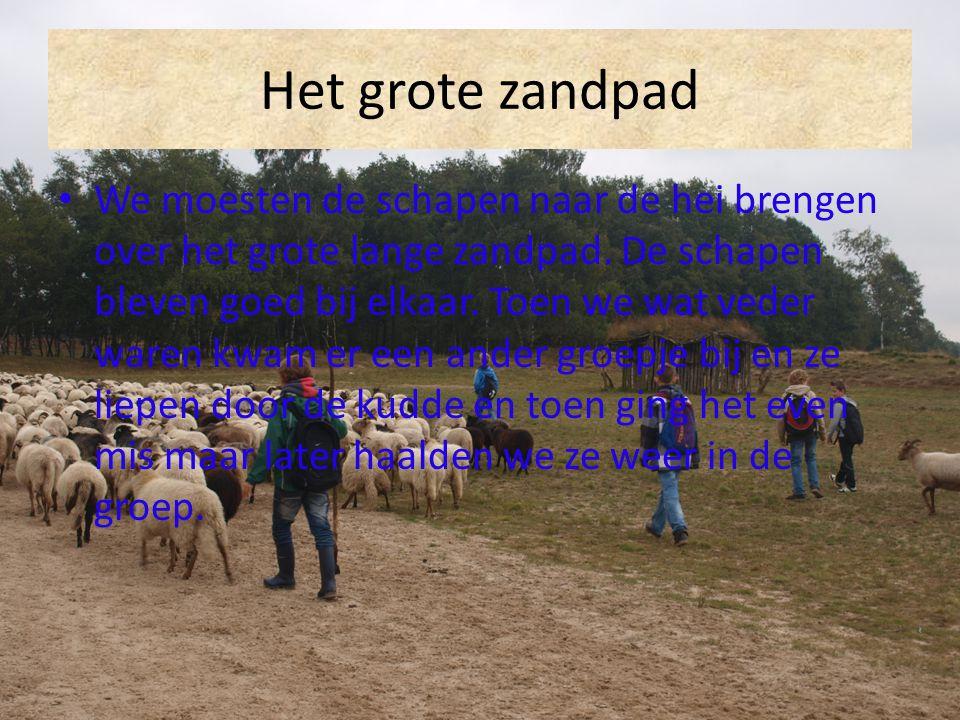 Het grote zandpad We moesten de schapen naar de hei brengen over het grote lange zandpad. De schapen bleven goed bij elkaar. Toen we wat veder waren k