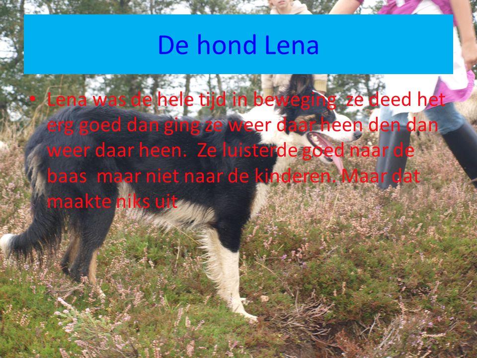 De hond Lena Lena was de hele tijd in beweging ze deed het erg goed dan ging ze weer daar heen den dan weer daar heen. Ze luisterde goed naar de baas