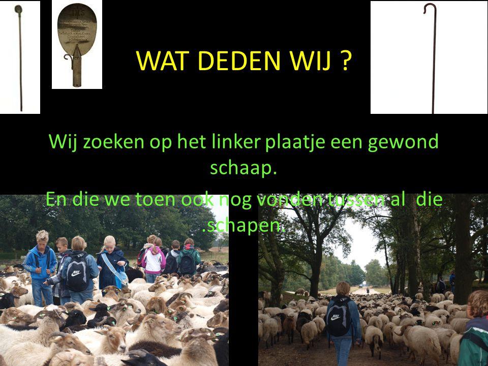 WAT DEDEN WIJ ? Wij zoeken op het linker plaatje een gewond schaap. En die we toen ook nog vonden tussen al die.schapen.