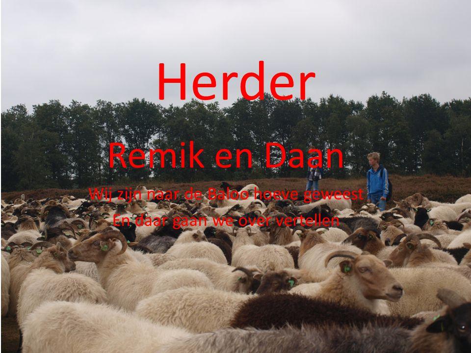 Herder Remik en Daan Wij zijn naar de Baloo hoeve geweest En daar gaan we over vertellen