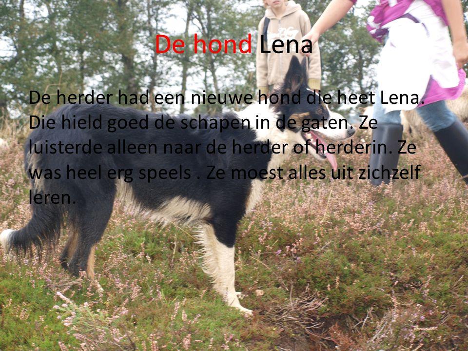 De hond Lena De herder had een nieuwe hond die heet Lena.