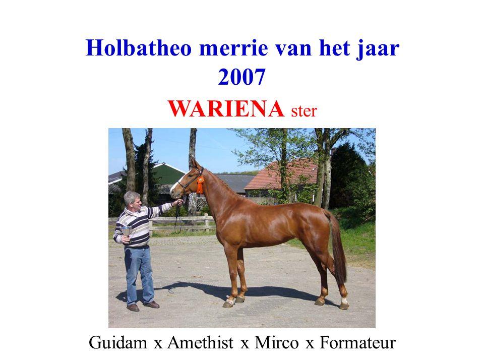 Holbatheo merrie van het jaar 2007 WARIENA ster Guidam x Amethist x Mirco x Formateur