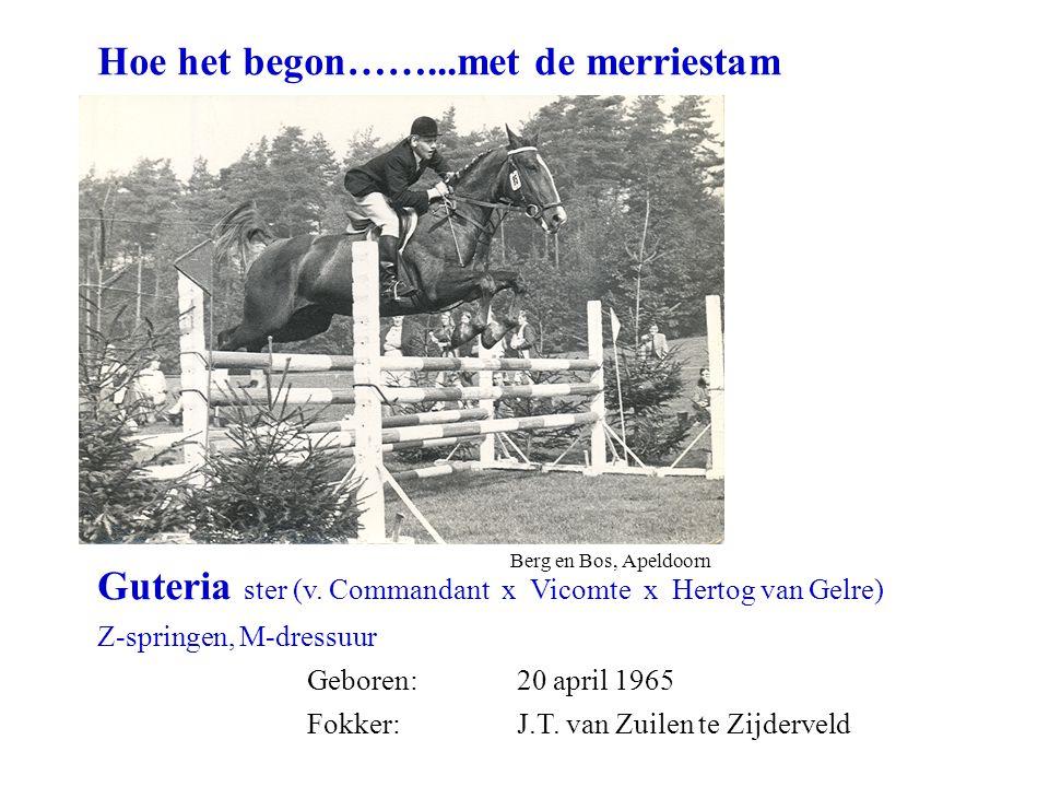Hoe het begon……...met de merriestam Guteria ster (v.