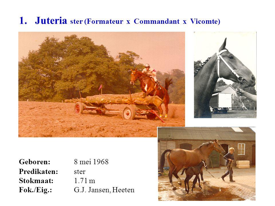 1. Juteria ster (Formateur x Commandant x Vicomte) Geboren: 8 mei 1968 Predikaten: ster Stokmaat:1.71 m Fok./Eig.: G.J. Jansen, Heeten