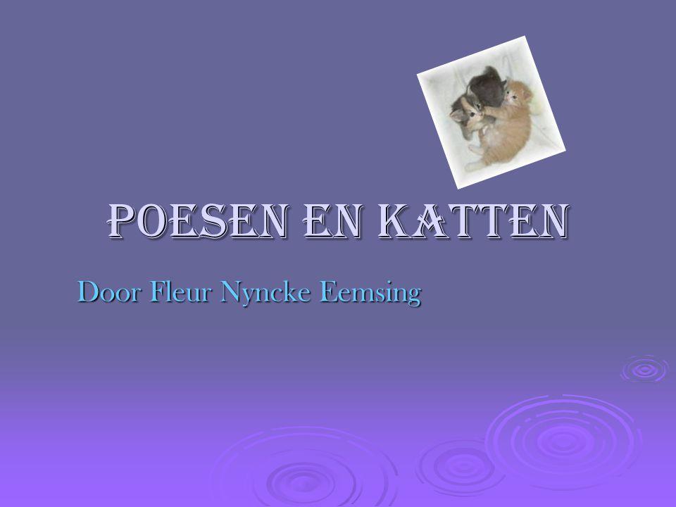 Poesen en katten Door Fleur Nyncke Eemsing