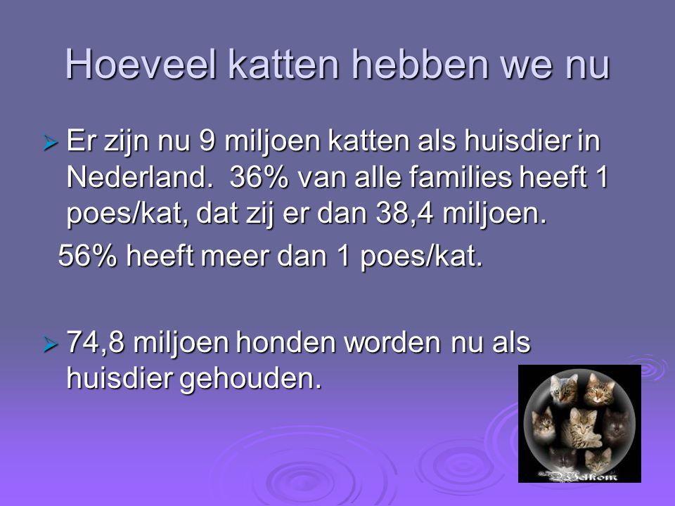 Hoeveel katten hebben we nu  Er zijn nu 9 miljoen katten als huisdier in Nederland. 36% van alle families heeft 1 poes/kat, dat zij er dan 38,4 miljo