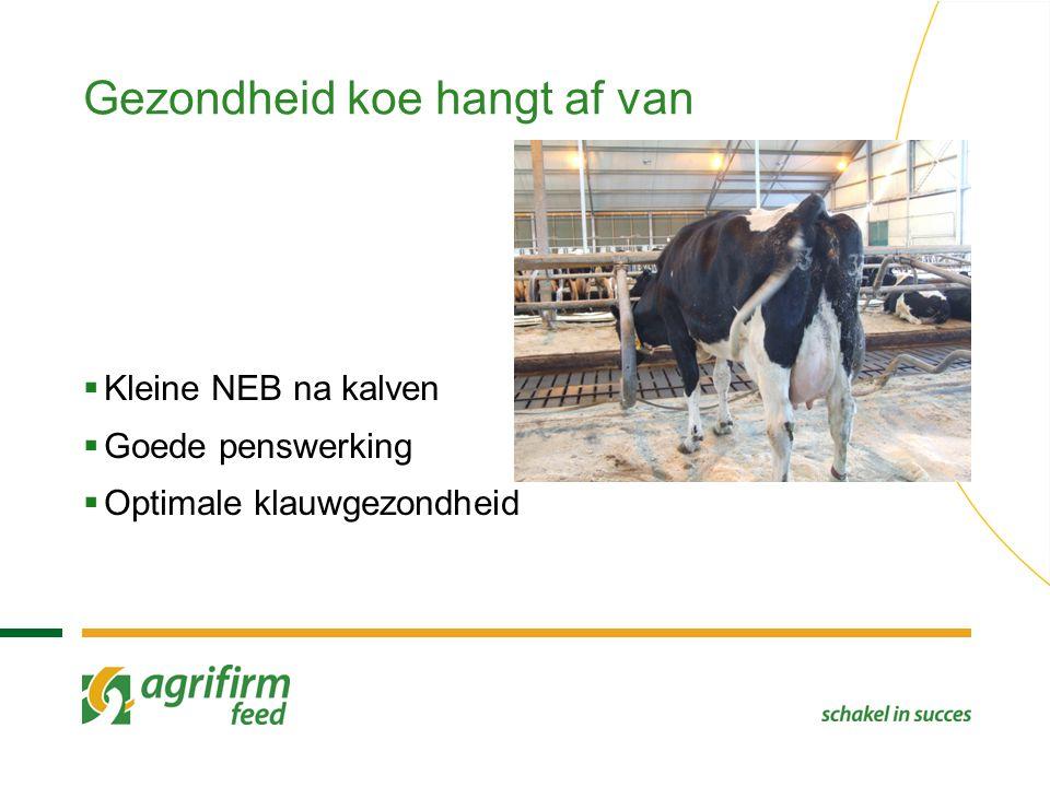 Gezondheid koe hangt af van  Kleine NEB na kalven  Goede penswerking  Optimale klauwgezondheid